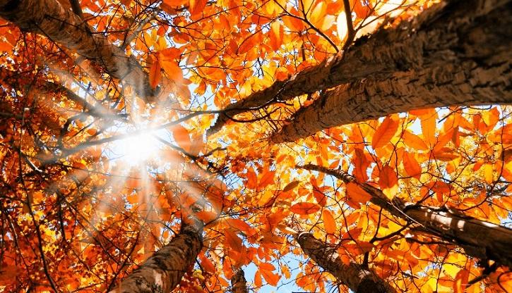 در پاییز بدرخشید ...