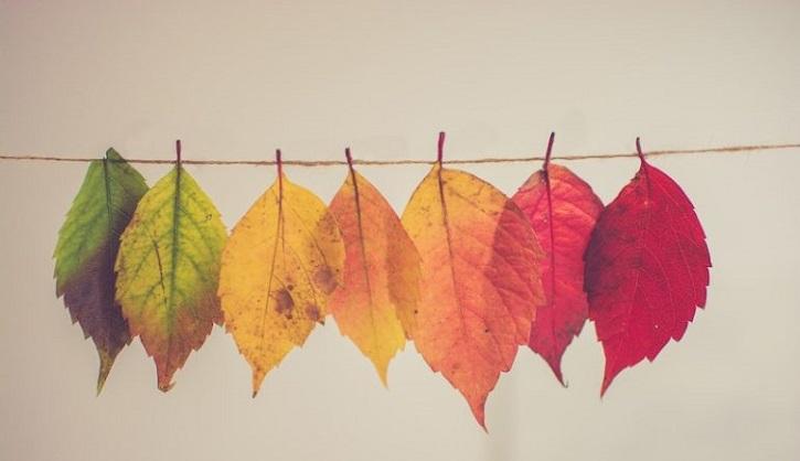 در فصل پاییز چه رنگ هایی بپوشیم؟