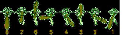 آموزش بستن دو مدل کراوات ( دوگره و گره چهاردستی)